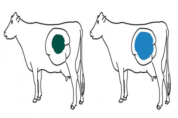 Bio Chlor dry cow rumen